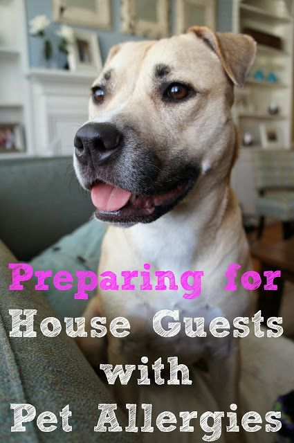 Preparing for House Guests with Pet Allergies