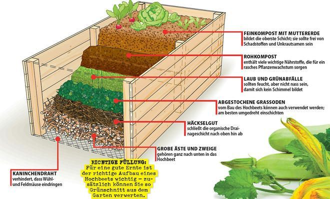 Create A Raised Bed Vegetable Garden Raised Beds Raised Garden Beds Raised Beds