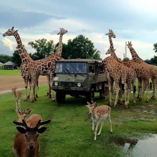 The Global Wildlife Center in Louisiana! Right in our backyard!