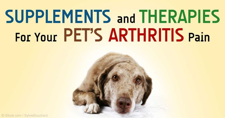 Natural Remedies To Treat Arthritis In Dogs