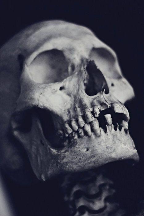 Skull via Red Medusa in Photography - Black & White