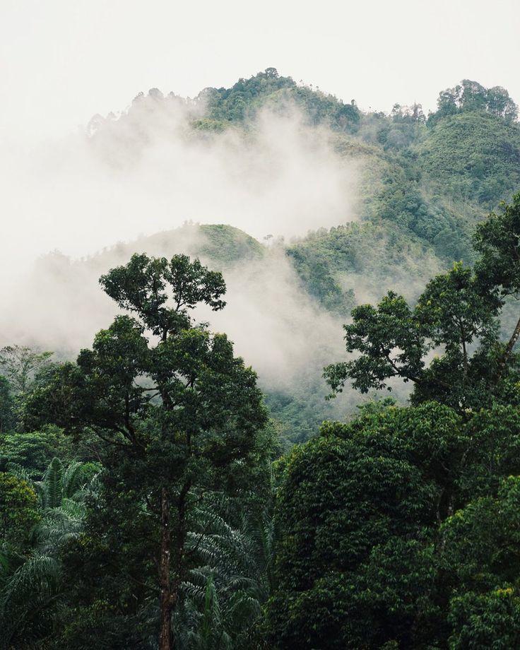 Malaysia,Taman Negara National Park Martina Bisaz (@MartinaBisaz) | Twitter
