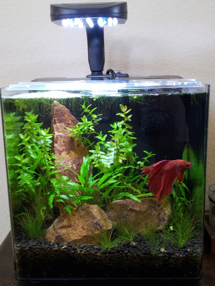 Here is the Evolve 2 after a couple of months.  I still need to add some shrimp to get rid of the hair algae...