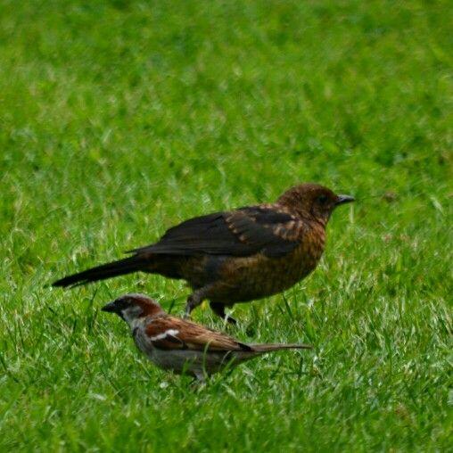 Friends in the garden by Calvin
