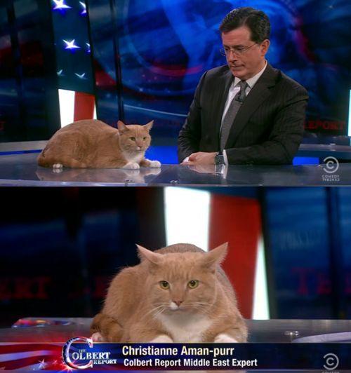 Christianne Aman-purrrrrrrr: Colbert Report Middle East Expert.