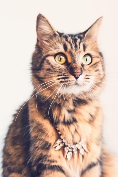 Prowadzisz biznes związany ze zwierzakami i potrzebujesz spersonalizowane pod swój biznes fotki. Zapraszamy do współpracy! W ekipie mamy także pieseły. Ogarniamy grafiki/fotki/obrazki.Jeśli nie potrzebujesz fotek z kotem a podoba Ci się pomysł zostań naszym Fanem :)https://www.facebook.com/simafavcat/