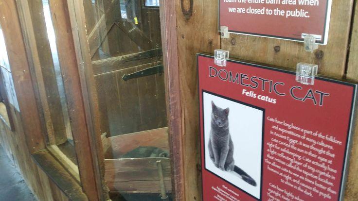 My local zoo has a cat exhibit