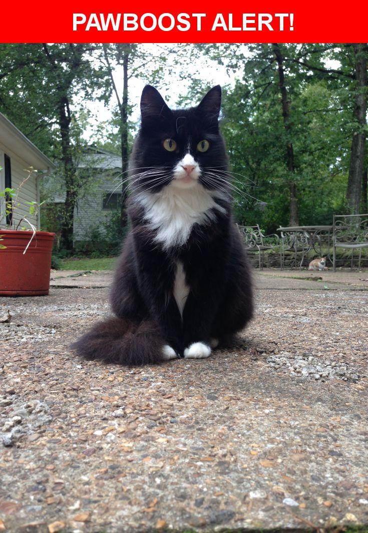 Please spread the word! Sylvester was last seen in Signal Mountain, TN 37377.    Nearest Address: Near Arrow Drive, Signal Mountain, TN, United States