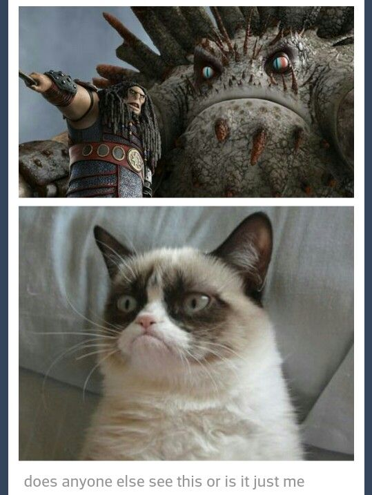 After seeing this I'll never look at that Bewilderbeast any other way and when I look at grumpy cat I will think of this