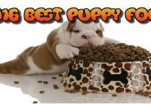 Top 10 Best Puppy Food Brands For 2016