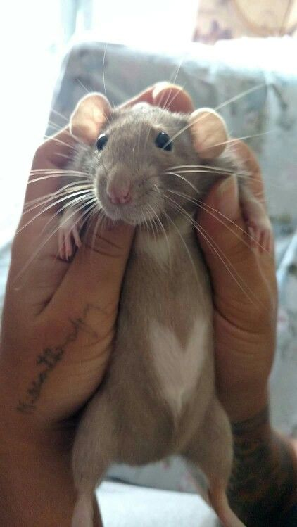 That rat is SO FLIPPING CUTE and that tattoo along the thumb is crazy cute too!