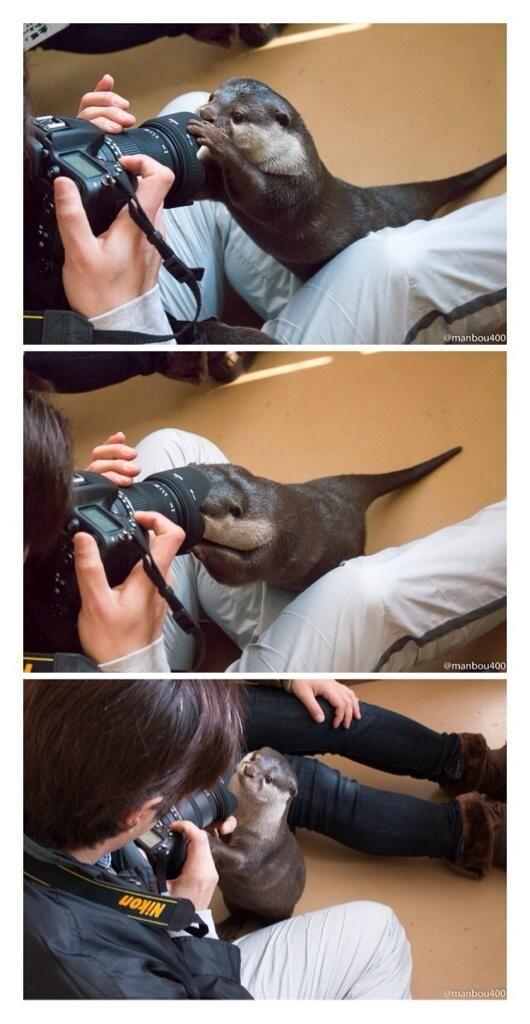 写真上「写真?」 写真中「撮って!撮って!」 写真下「撮れた?」 #カワウソ #みさき公園  manbou400