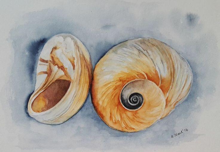 """Original Aquarell, """"Schnecken-Muscheln"""" (1.)  17x24 cm"""