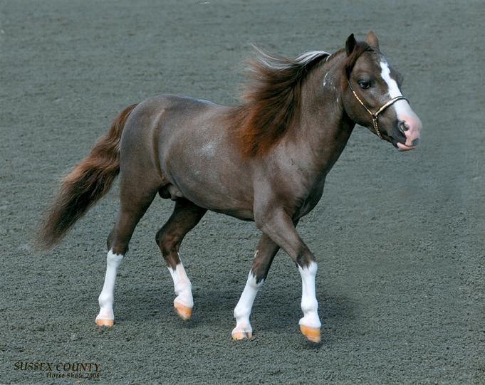 falabella horse - Google Search