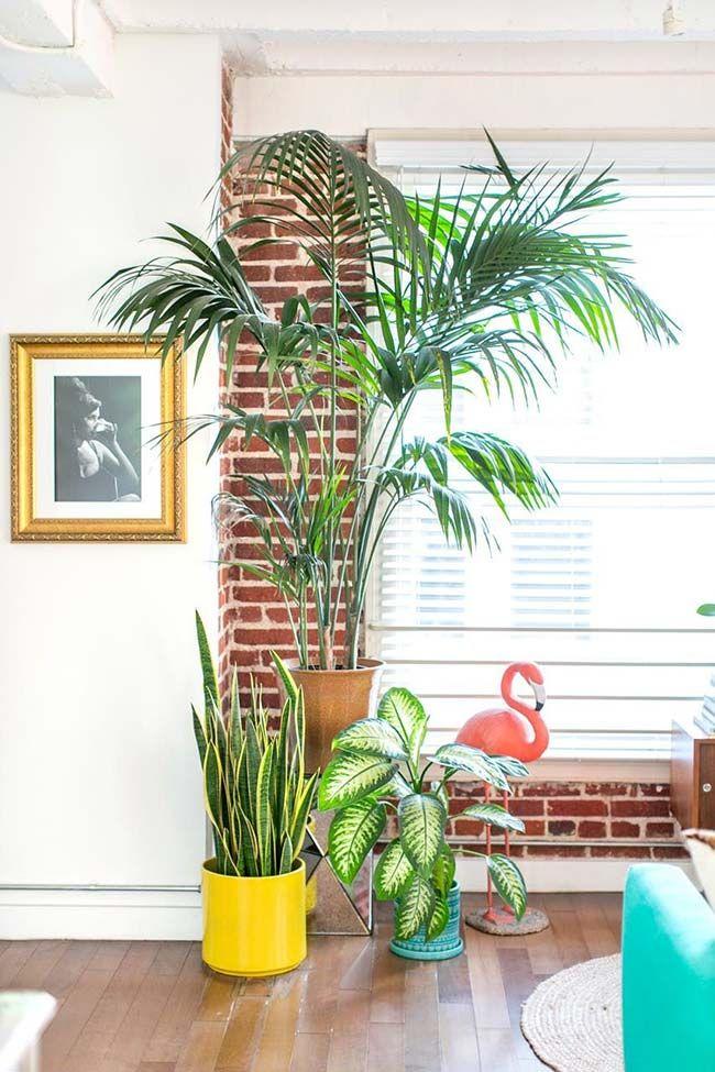 Vaso De Palmeira Rafia Se Destaca Em Meio A Outras Plantas