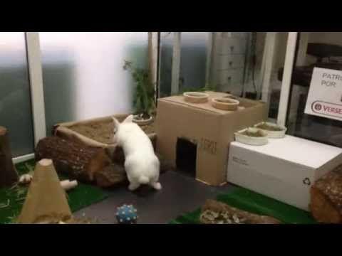 Parque atracciones conejos - YouTube - Tarde de juegos organizada en nuestra Clínica Veterinaria para que nuestros pacientes conejos se lo pasaran en grande! #veterinario #conejos