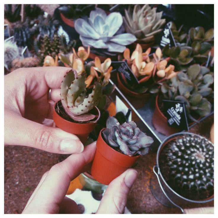 Mini cacti!