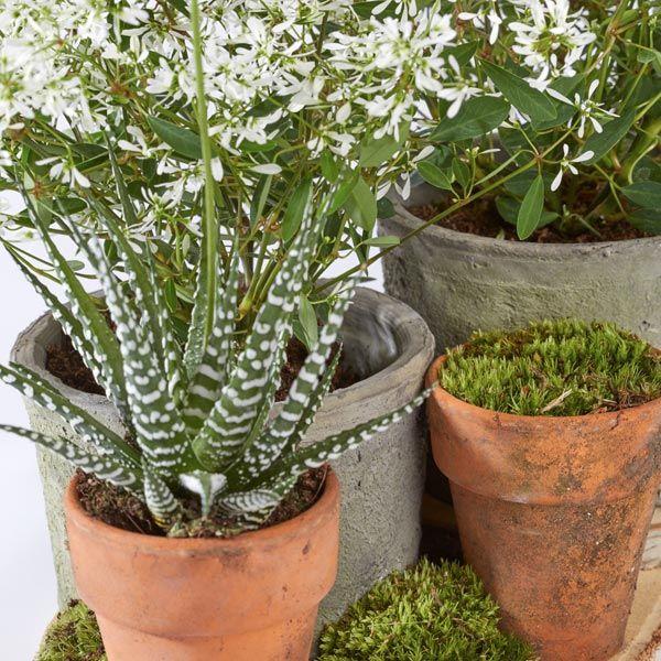 Grafarrangement Potten & Planten