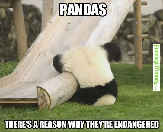 FunniestMemes.com • You just got to love pandas for all the stupid things they do!