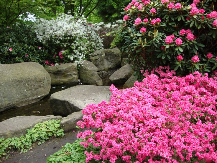 Welcome to heaven  #flower #nature #pink #heaven