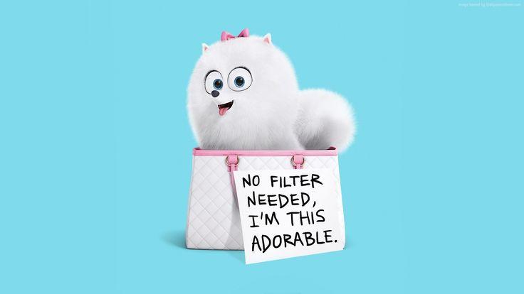 the secret life of pets wallpaper movies