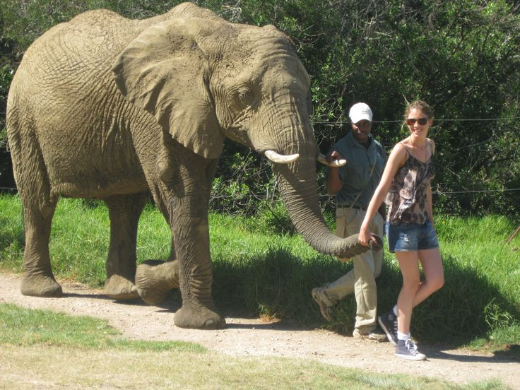 The Elephant Sanctuary. What an experience.