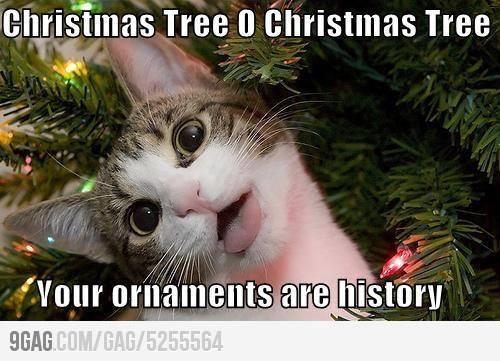 My cat every Christmas...