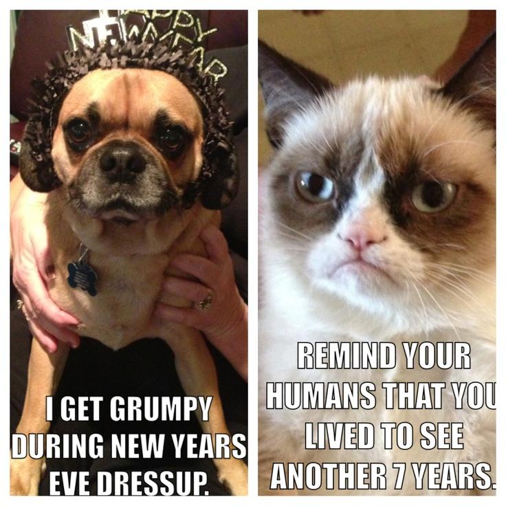 Pin by Tony Nally on Funnies Grumpy dog, Angry cat
