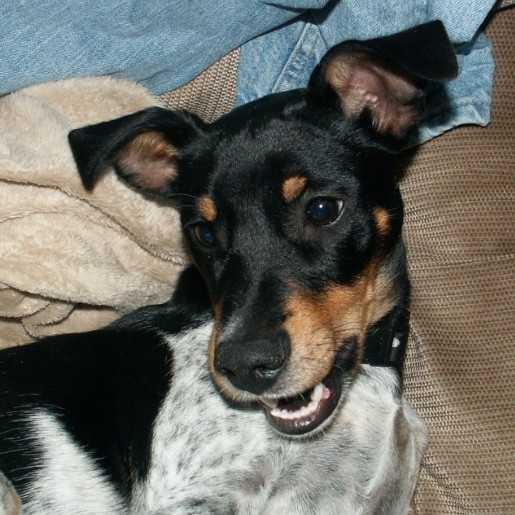 Why Do Weiner Dogs Bark So Much