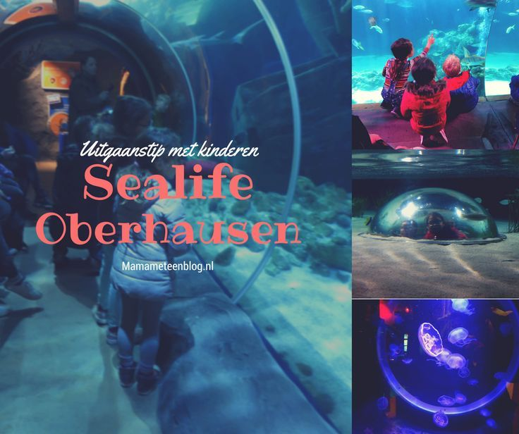 Uitgaanstip voor kinderen: Sea Life Oberhausen https://mamameteenblog.nl/uitgaanstip-kinderen-sea-life-oberhausen/