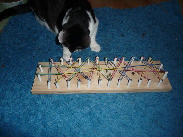 Fummelbretter - Katzen Forum