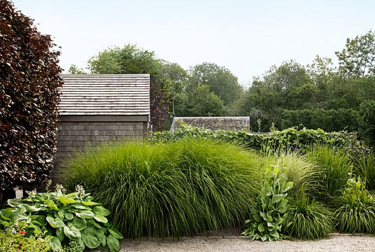 Instead of the usual prim suspects—boxwood, privet, holly—Conway composed this hedge with tall, breezy grasses. A seven-foot-tall maiden grass (Miscanthus sinensis 'Gracillimus'), along with several smaller stands of dwarf fountain grass (Pennisetum alopecuroides 'Hameln'), creates a sense of enclosure that has a fluid, almost musical effect. - CountryLiving.com