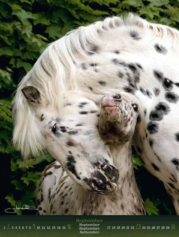 leopard appaloosas: Animal Rescue, New Mommy, Show Off, Mothers Love, Black White, Animal Spirit Guide, Leopards Appaloosa, Baby Hors, God Creatures
