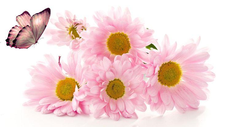 flowers devine wallpaper - photo #5