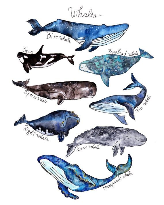 Set Of 2 Prints Watercolor Whale Print Shark Print Whale Poster