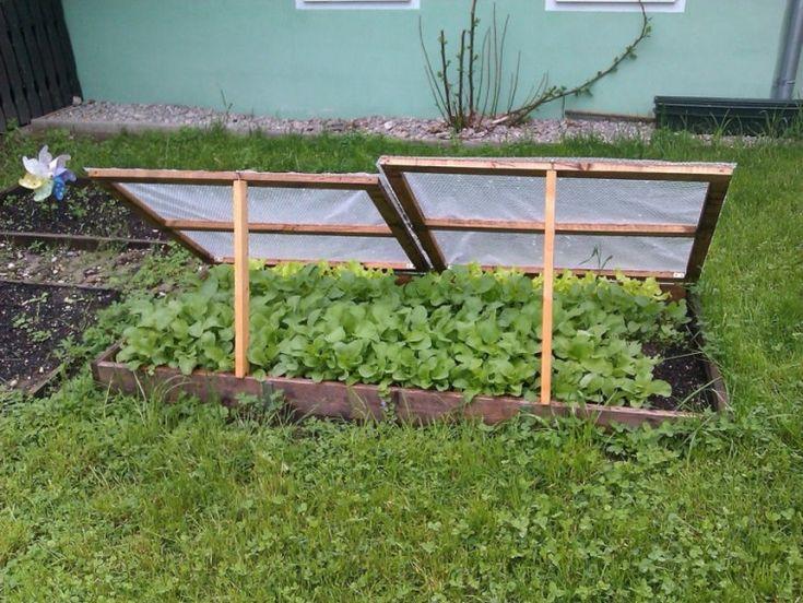 Könnyen eszkábálhatunk egy ágyás méretű, átlátszó lappal letakart apró üvegházat, amelyben minden zöldség extra koraivá válik.