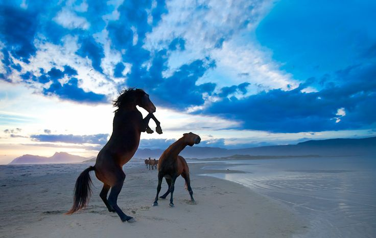 The Wild Horses of Botriver and Kleinmond only a short drive from Pringle Bay.