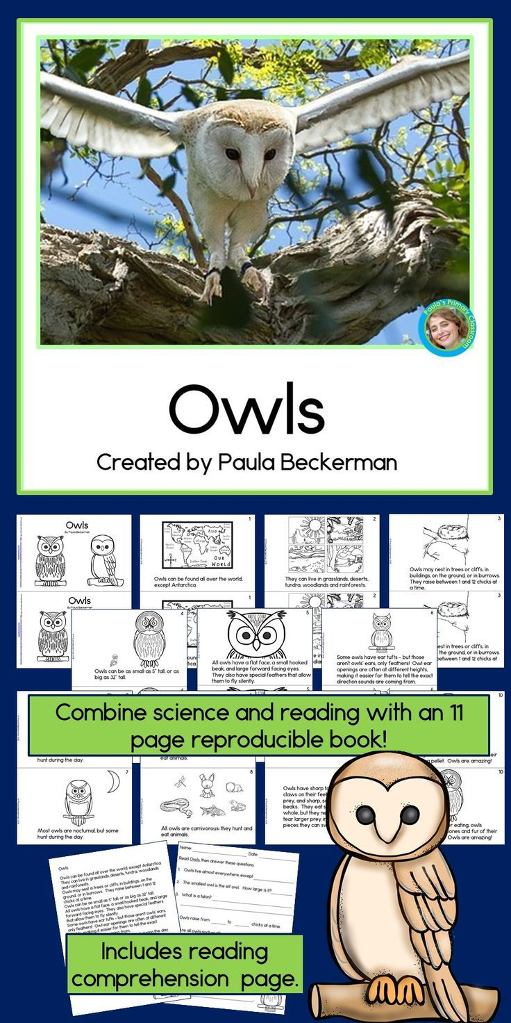 Owls Non Fiction Guided Reading Book Guided Reading Books Reading Fun Guided Reading [ 1472 x 736 Pixel ]