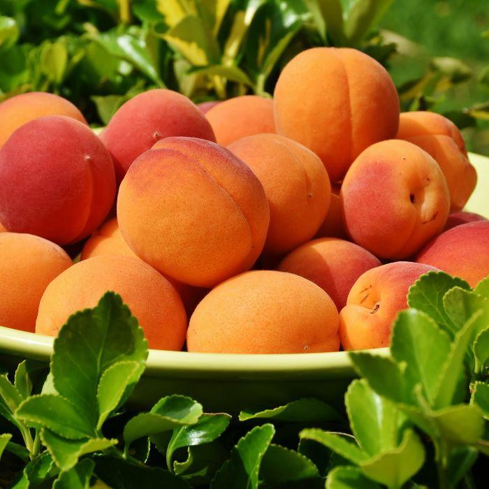 Meruňky patří u nás mezi oblíbené plodiny. Jak prospívají našemu tělu a jak je lze upravit, se dozvíte v tomto článku. další zajímevé články najdete na našem webu www.fajnejidlo.eu