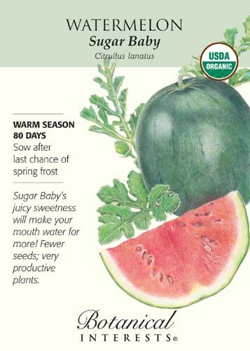 """80 days. Summer never tasted so good! """"Sugar"""" means delectable sweetness, and """"Baby"""" means small enough to easily fit in the refrigerator! This plant produces an abundant crop of 7"""""""" - 10"""""""", 8 - 10 po"""