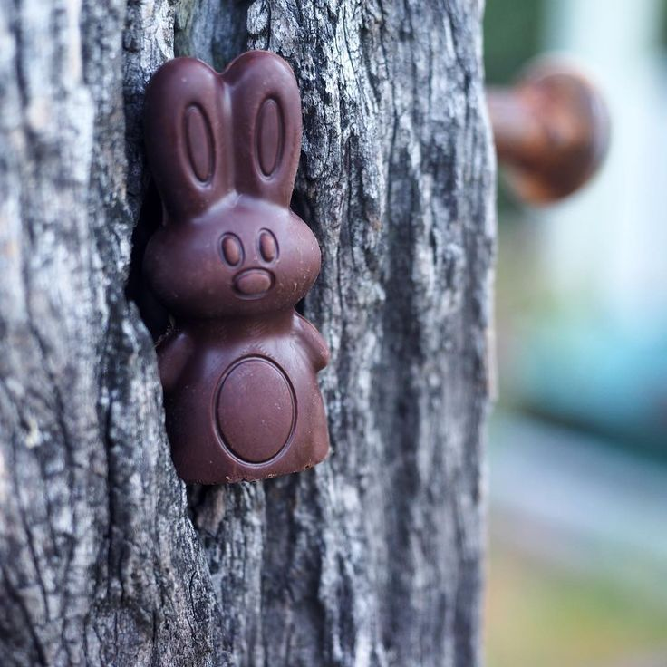 "Vegan Easter Eggs ""We're getting creative with our Easter hunt hiding spots this year! Here's one of our caramel buns hiding out. These tasty treats are perfect for your…"""