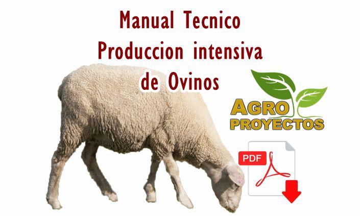 Cria y engorda de ovinos, Guía técnica para la cria y engorda de borregos