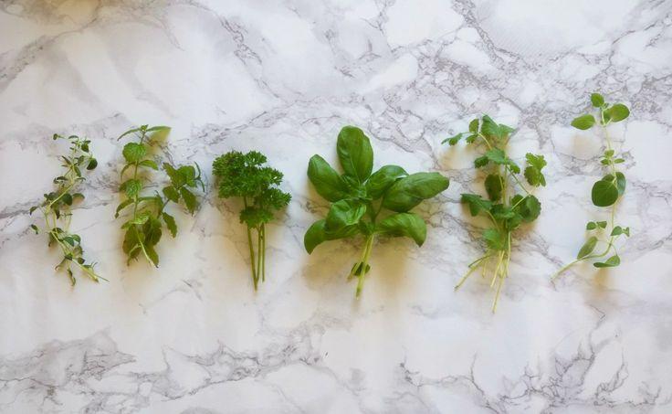 Frisk vinter med økologiske urter
