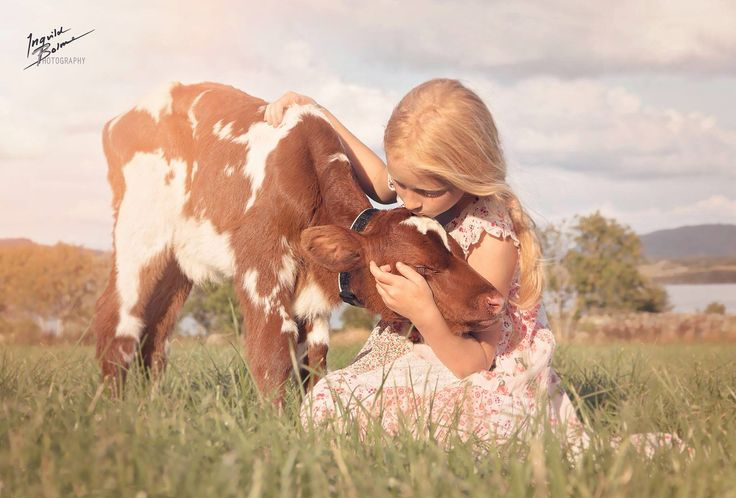 My girl with a two days old little calf  © Ingvild Bolme Photography