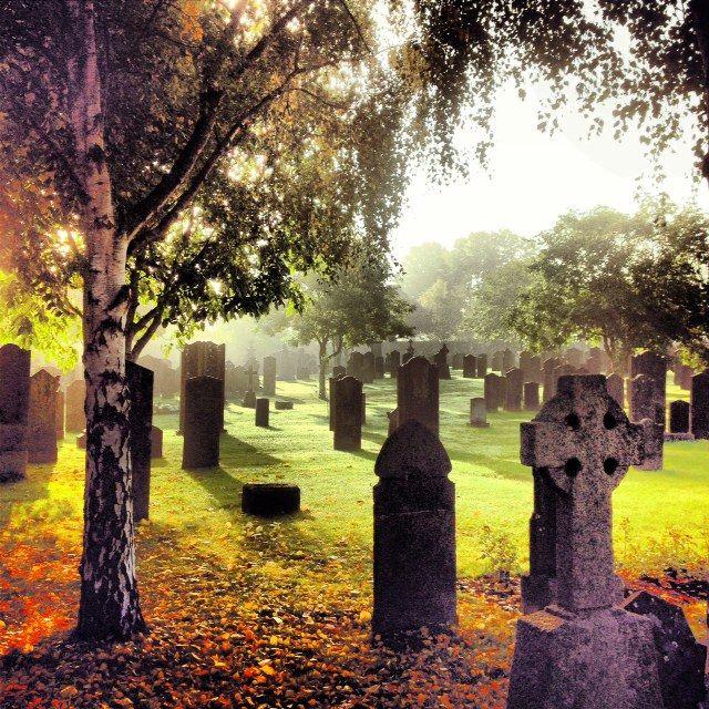Autumn colours, Glasnevin Cemetery.