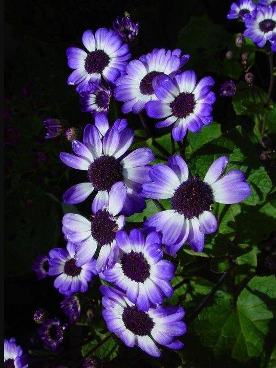 pin by shabana padaliya on flowers