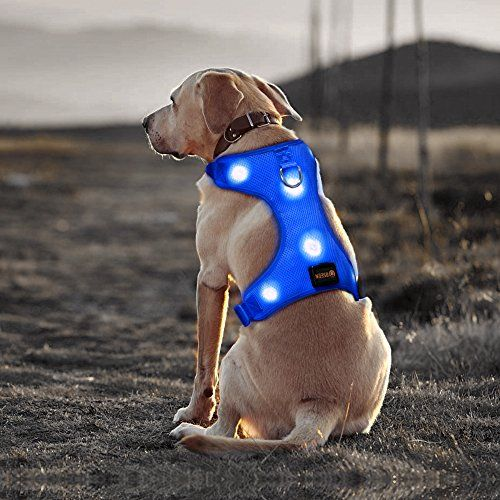 #Bseen #Comfort #Control #Dog #Harness #LED #Pets #Walking #Accessory #USB #Rechargeable #Soft #Mesh #Vest with #Adjustable #Belt #Padded #Lightweight #Collar for #Dogs #Puppies #SOFT #MESH #HARNESS & PERFECT ORGANIZER - Ultra #soft and highly durable #dog #harness made from Non-Toxic Meshing and Polyester, make your #dogs comfortable when running and night #walking. MULTIFUNCTION - Great for #walking, running, and all outdoor activities, maintains your dog's natural movement