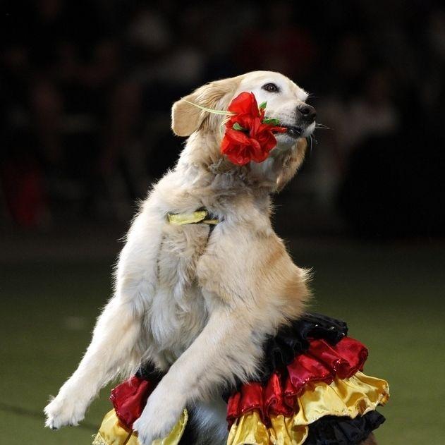 Собака танцует в Караганде ))
