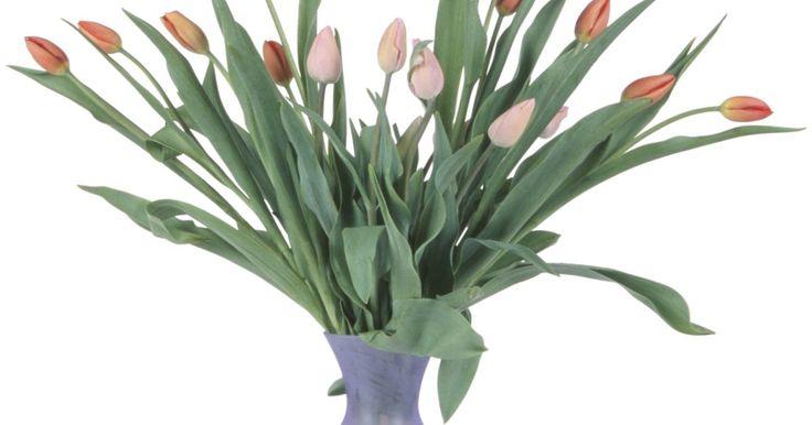 ¿Usar agua de hielo en el florero de los tulipanes ayudará a mantenerlas por más tiempo?. Los tulipanes son una de las flores de la primavera más comunes del mundo. Sus familiares flores en forma de copa se mantienen en alto por tallos delgados que funcionan bien en ramos y arreglos florales ocasionales formales. Un número de cosas prolongan la vida de los tulipanes cortados. Añadir unos cubitos de hielo en el florero es una de las ...
