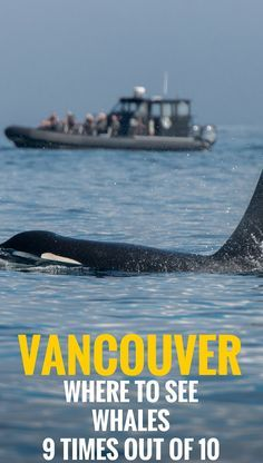 Find out everything you need to know before going on a whale watching tour in Vancouver, Canada. Everything to make your day out meeting wild Orcas truly memorable.    Travel Vancouver, Canada   Family Travel.